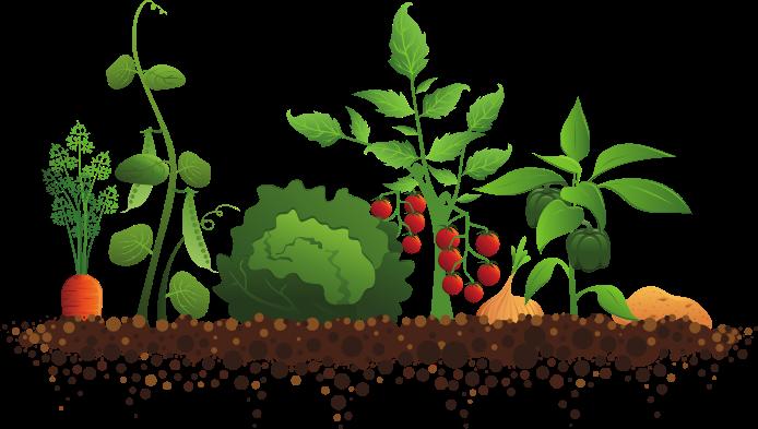 Vegetable-garden-clipart-and.jpg